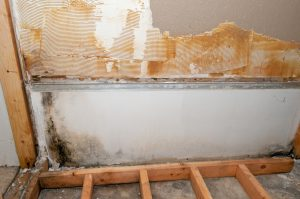 How To Recognize Warning Signs Of Mold In Your Home - All Canadian Renovations Ltd. - Bathroom Renovations Winnipeg